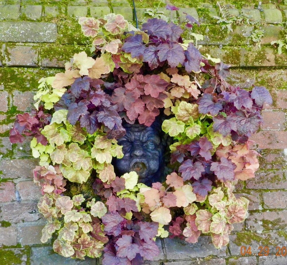 Heuchera Wreath