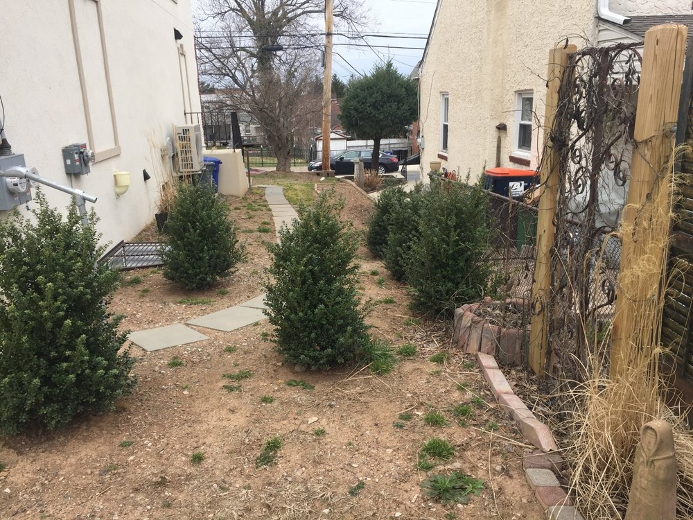 Front Side Yard BEFORE
