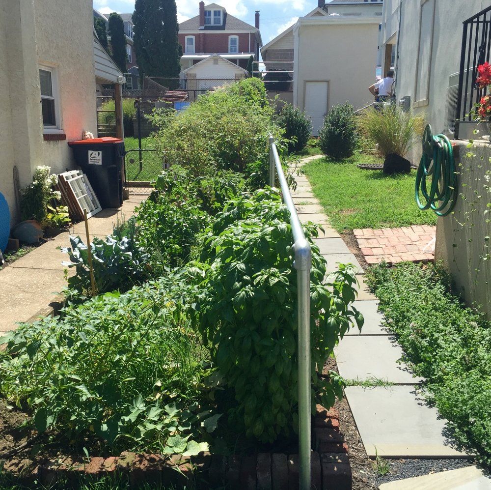 Edible Garden in Front Side Yard AFTER