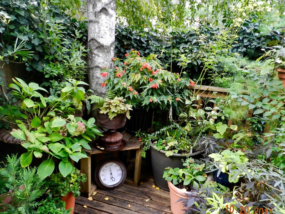 Back Deck Container Garden