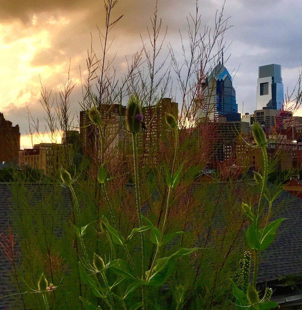View of Center City from Roof Deck