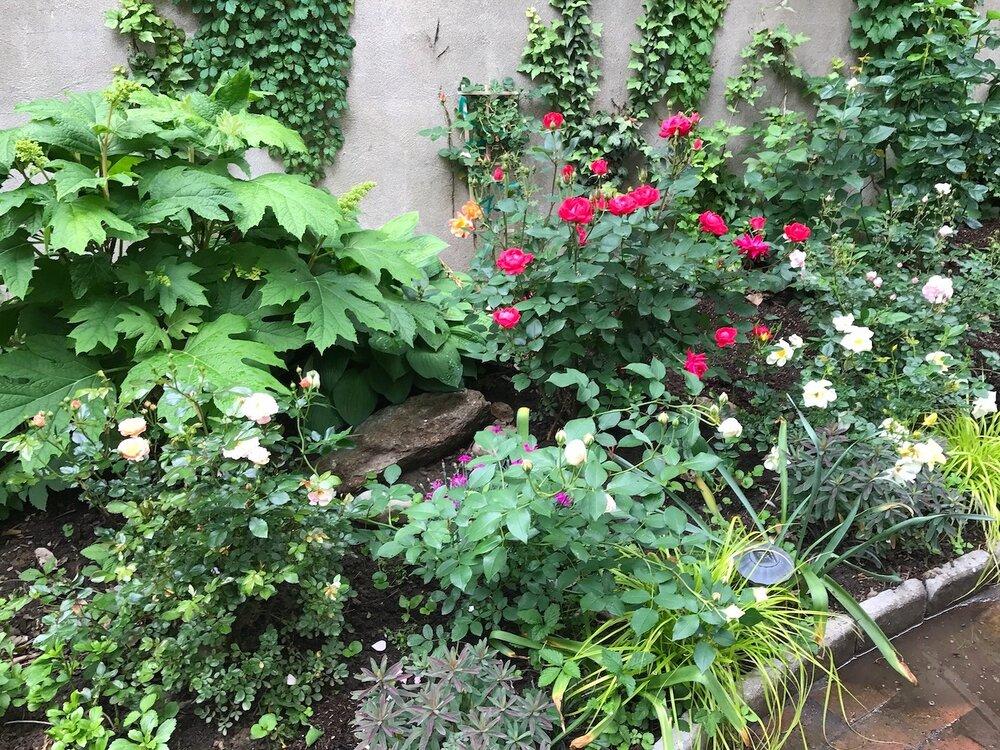 Bella Vista Rose Garden