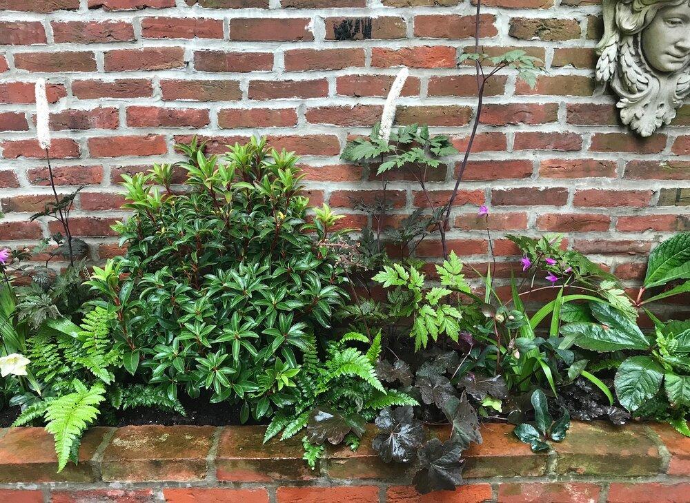 Delancey Courtyard Evergreens