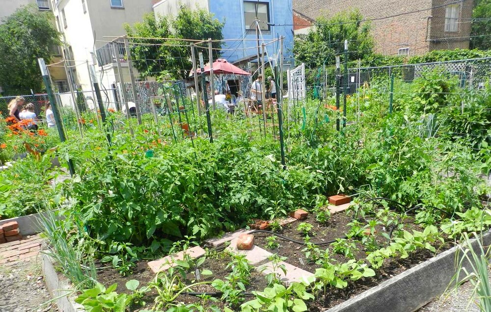 South-Street-community-Garden-3.jpg