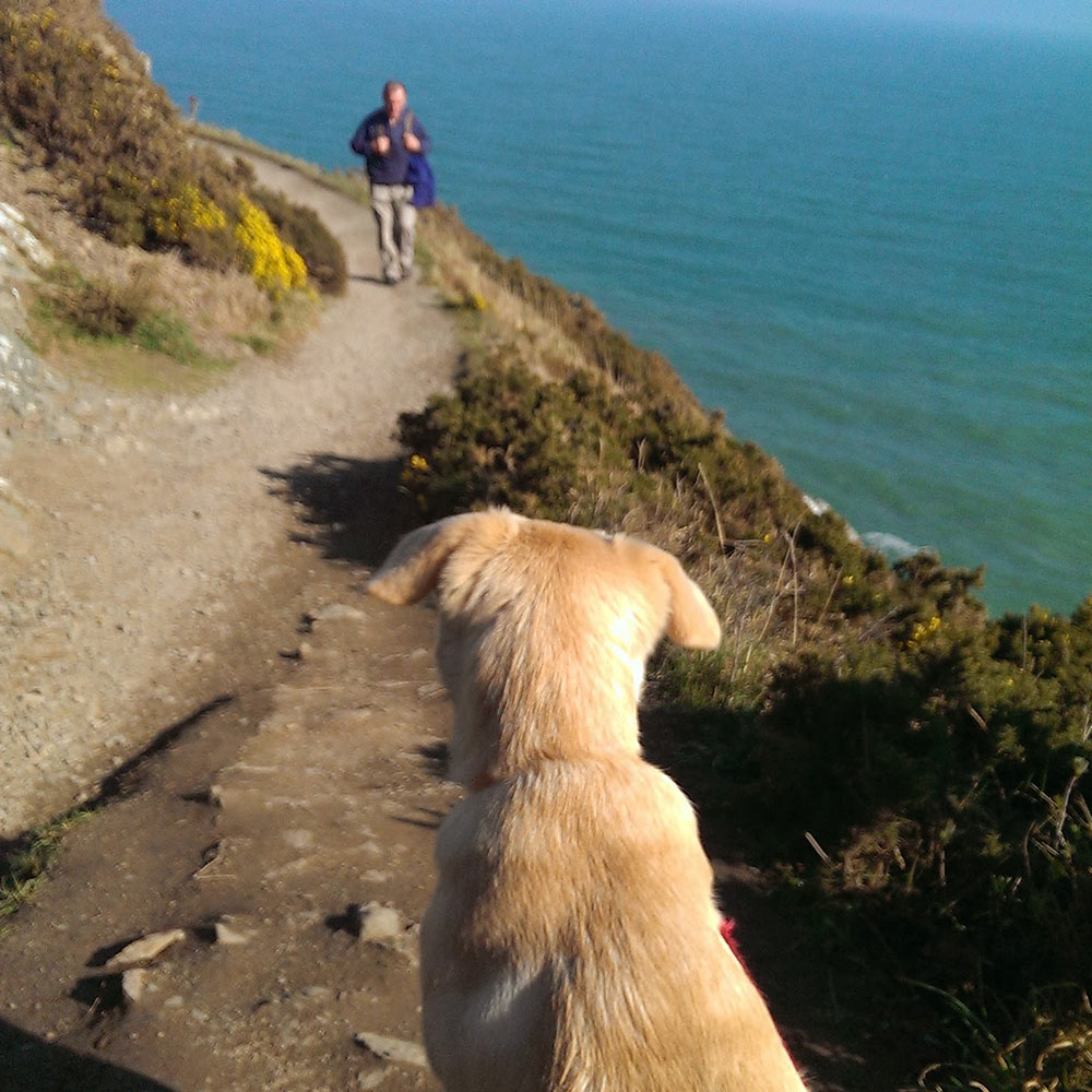 Puppy-dog-walking-cliff-walk.jpg