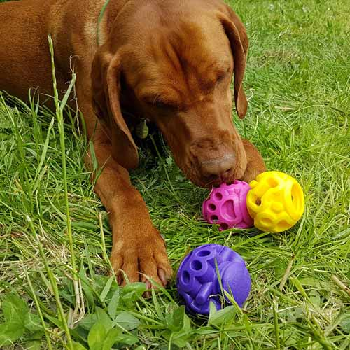 Mental-enrichment-dog-toys--20.jpg
