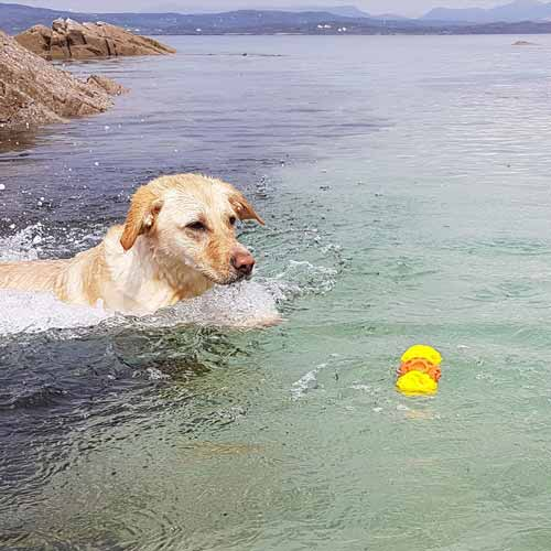 Floating-dog-toys-20.jpg