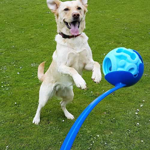 Ball-launcher-dog-toy-ball-20.jpg