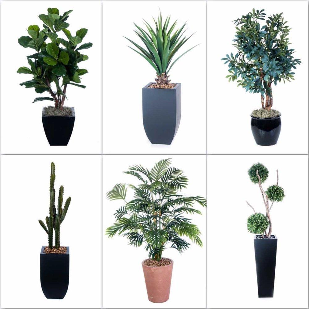 plant blog.jpg