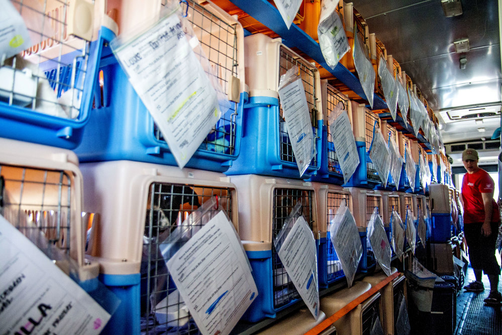 Heather Engstrom walks down the narrow one person hallway of pet carriers in the back of the bus. The bus contains 93 carriers, with Rescue Expresses goal being to transport over 125 animals each week. Which ensures that every carrier will be filled and that they don't leave behind any animal that they might have had room for.