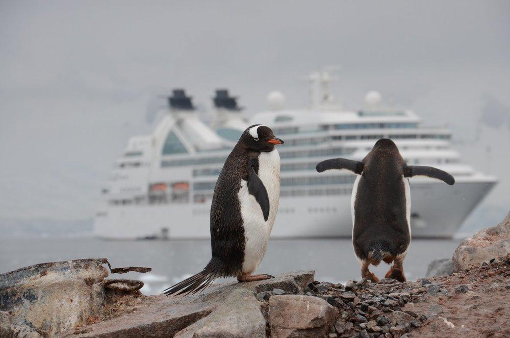 cruise penguins.jpg