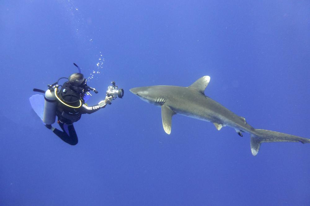 fiji - diving.jpg