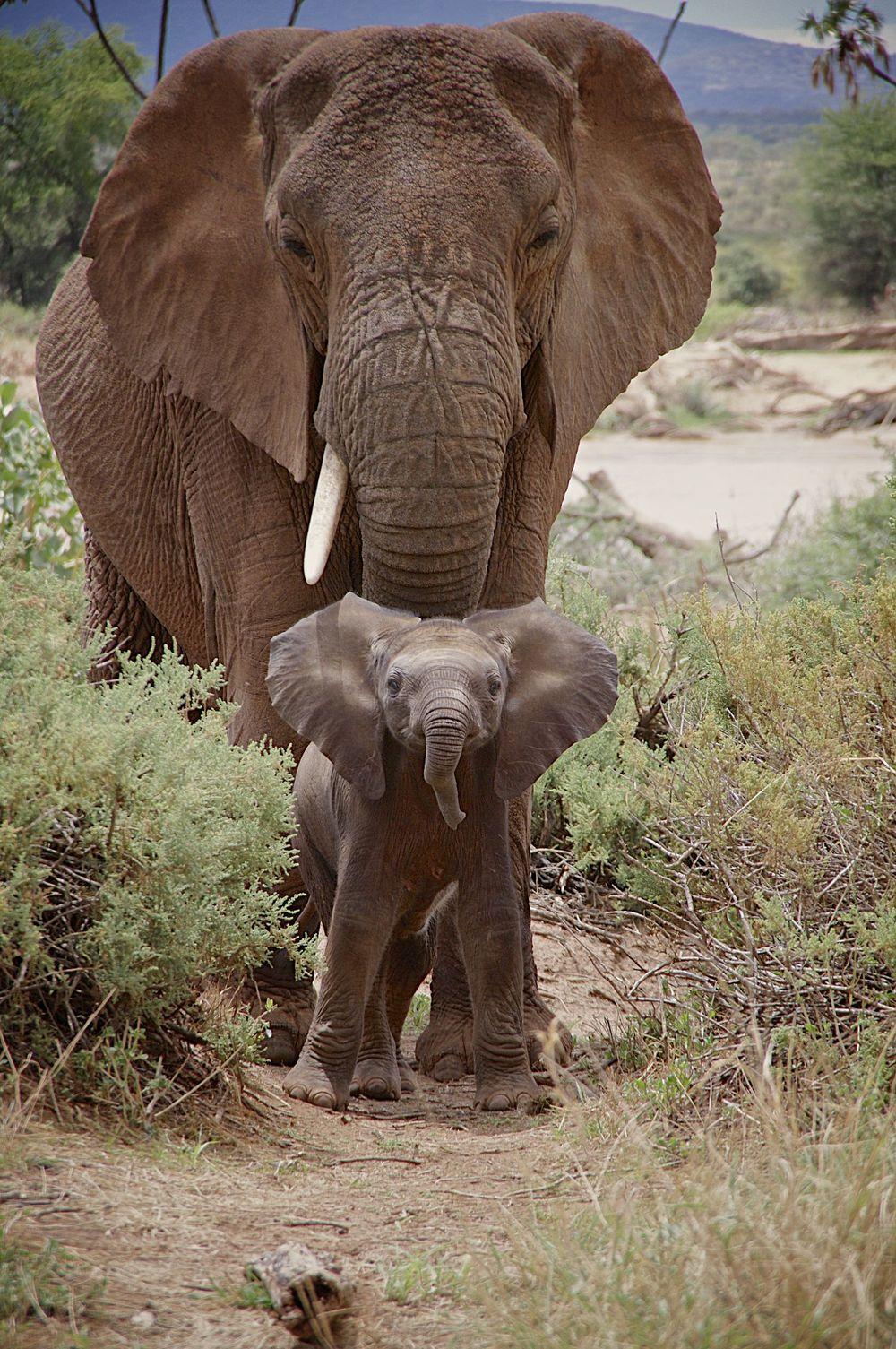 !Elephant.jpg