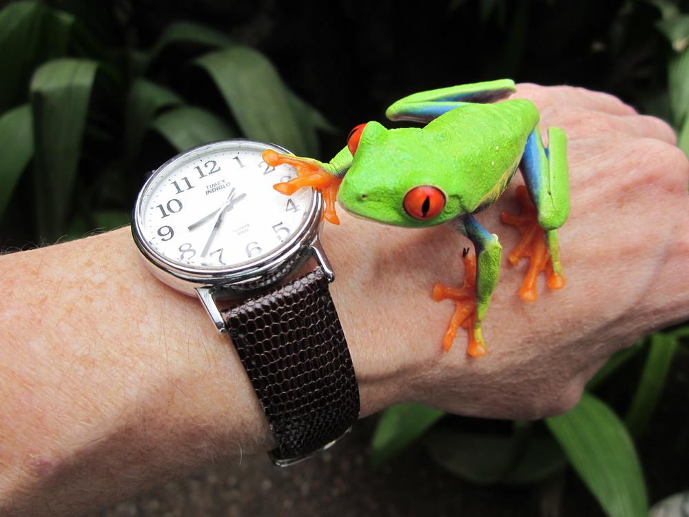 !FroG Watch.jpg