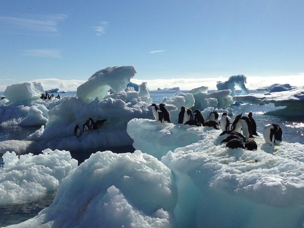 !Penguins.jpg