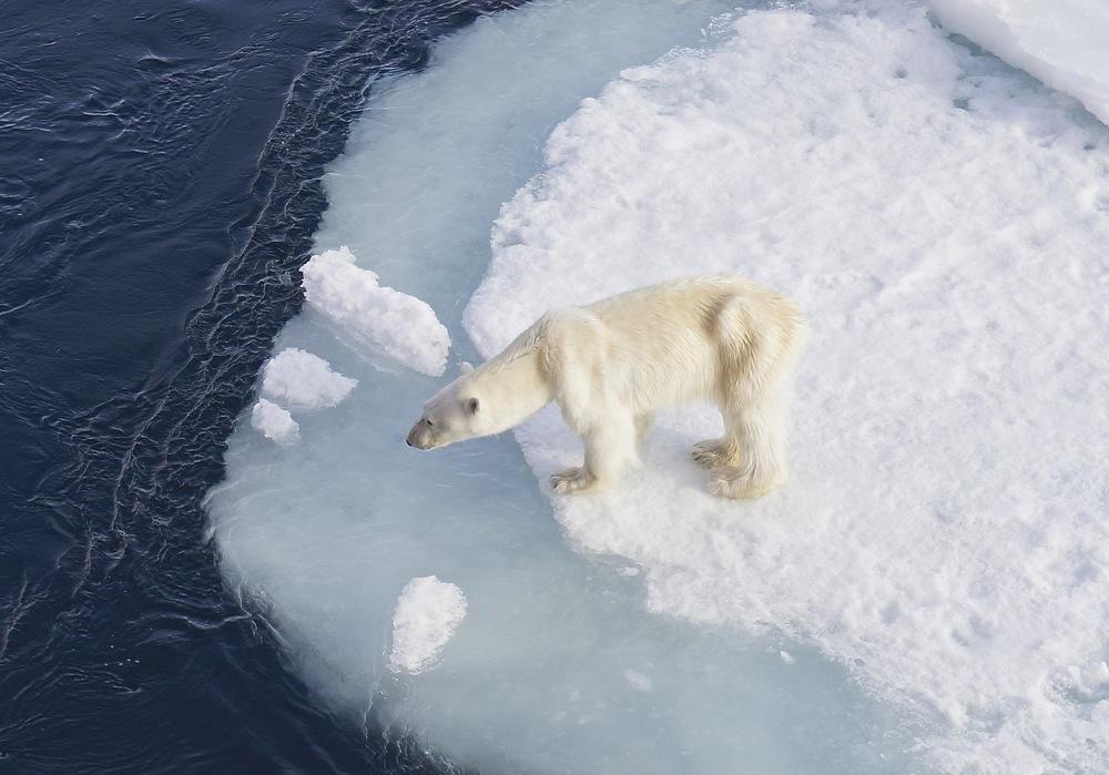 !Polar Bear.jpg