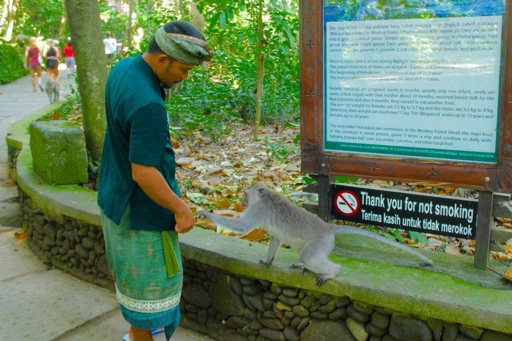 Bali23.jpg