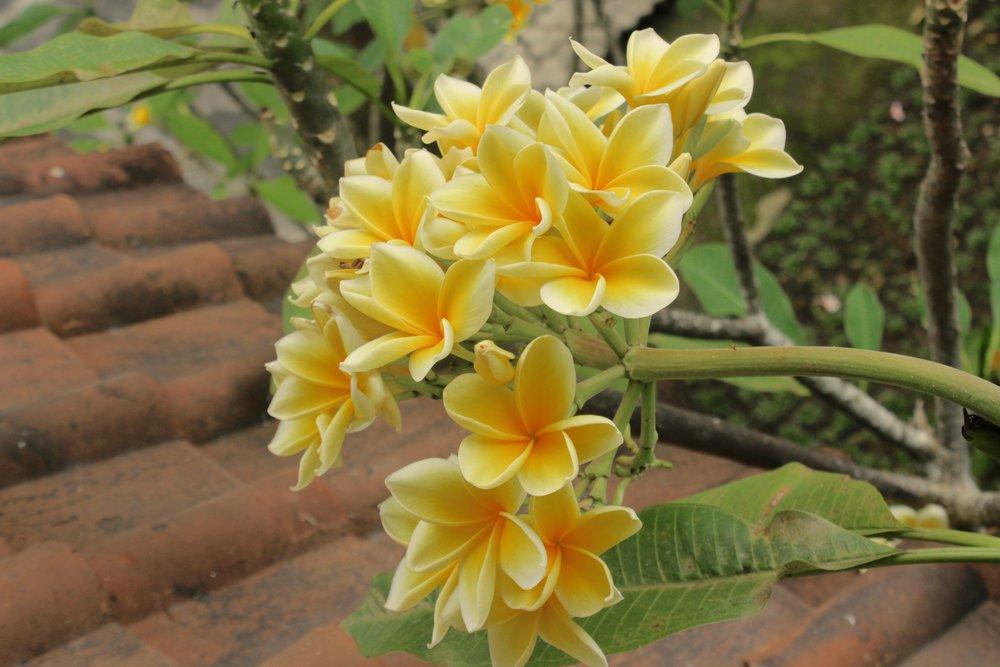 Bali38.jpg