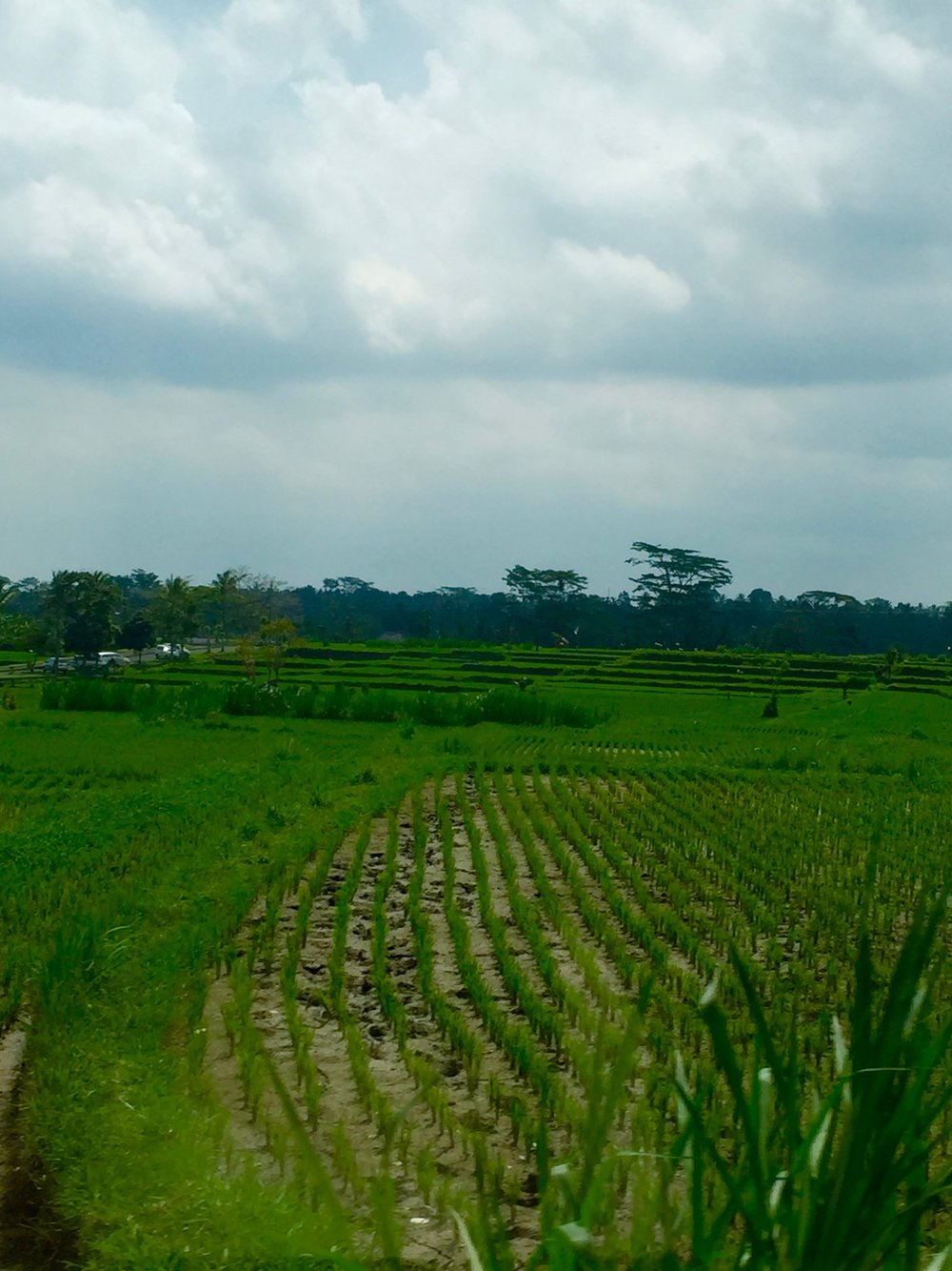 Bali28.jpg