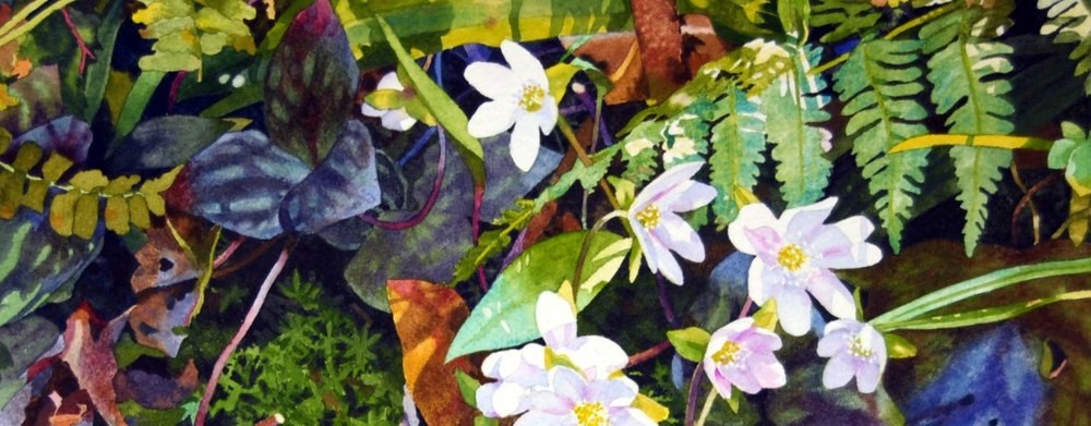 "Hepatica, 2013, watercolor on paper, 10"" x 13""(25.4 x 33 cm) DETAIL"