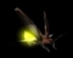 Angel: Firefly