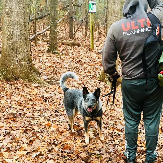 A little R&R #discgolf to end the year. #blueheeler #blueheelersofinstagram