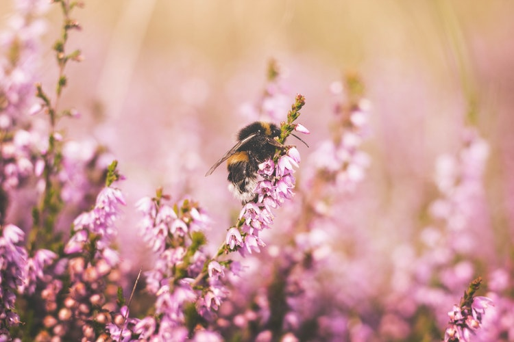 unsplash honey bee.jpg