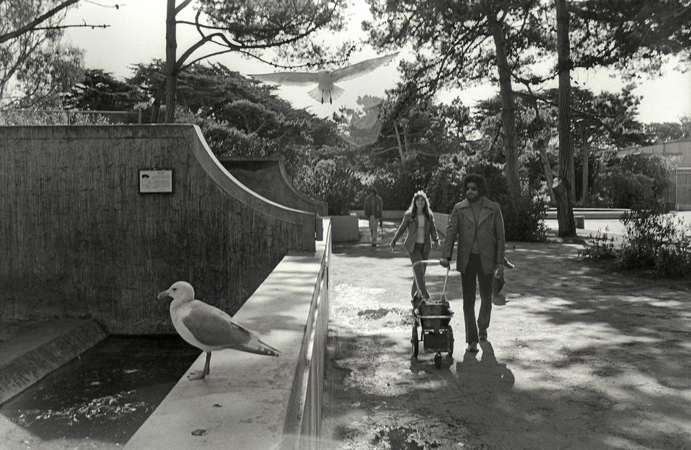 SF_Zoo2.jpg