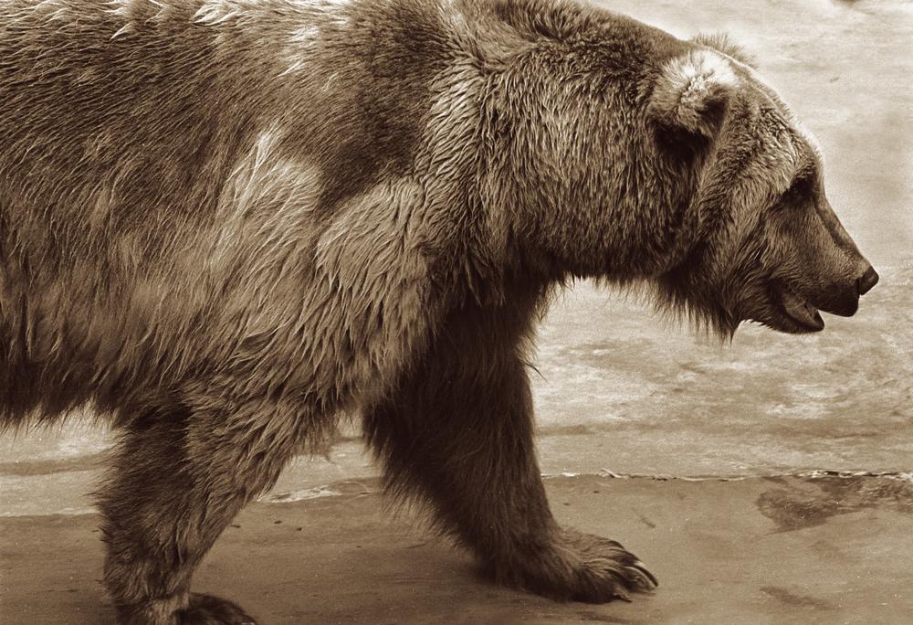 bearcopy.jpg
