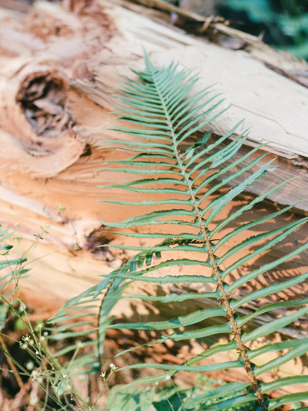 Flo&Romain(woods)-33.jpg
