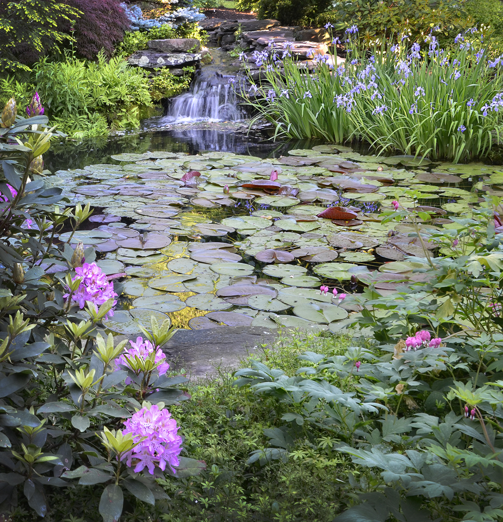 Laurie and Les Jacobs' lily pond