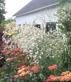 suzy flowers.jpg