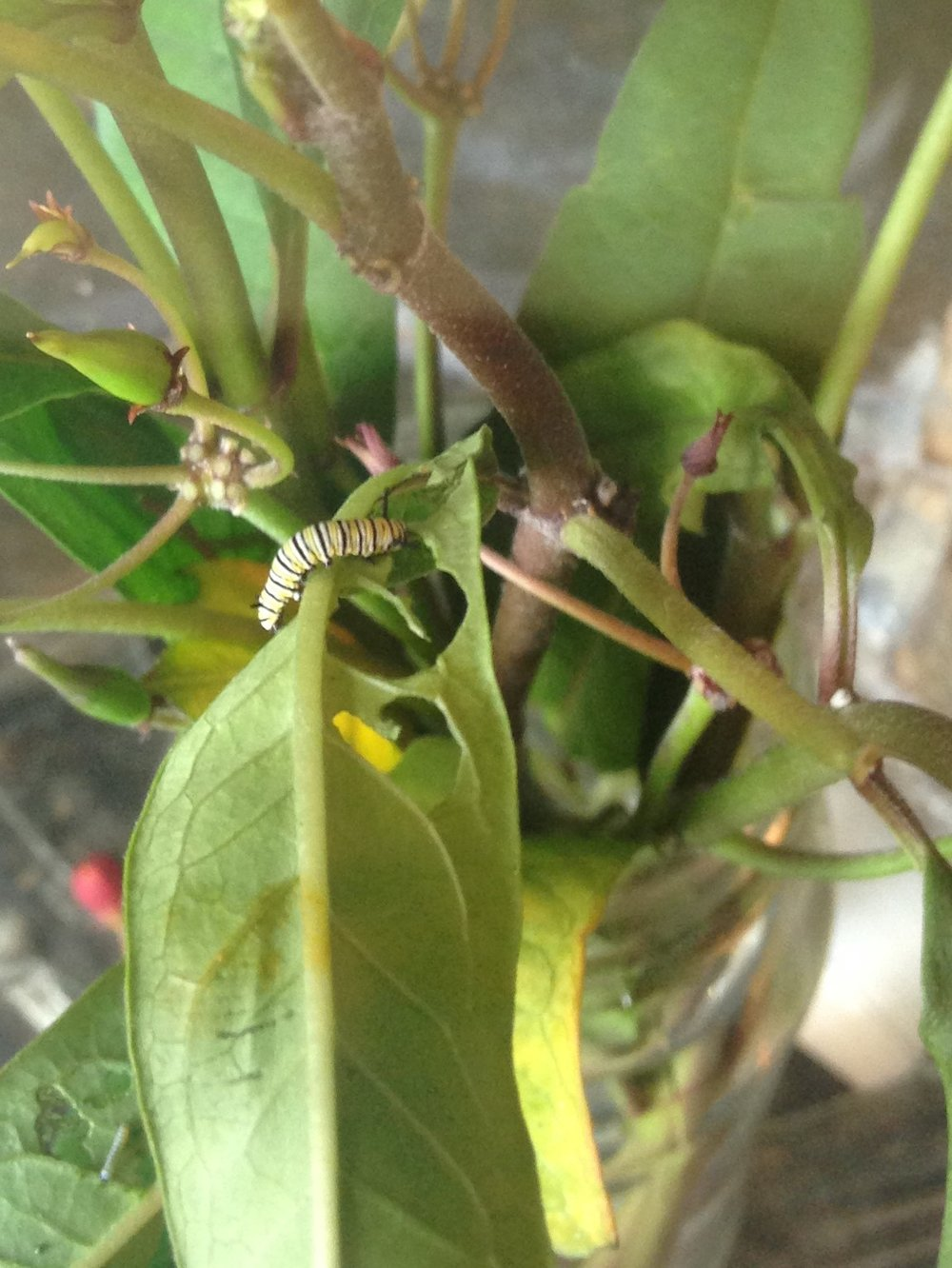 Medium-sized caterpillar