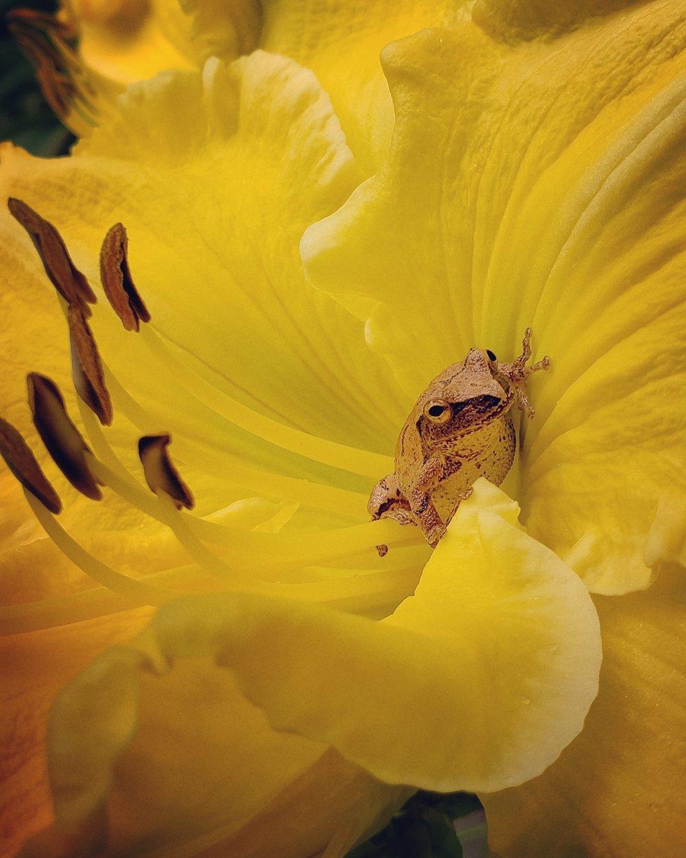 #5 Flowers Druckenbrod.jpg