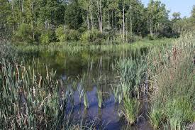 Abrams Creek Wetlands.jpg