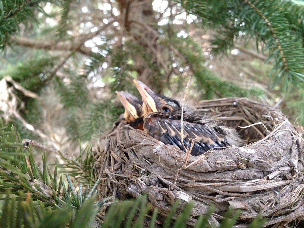 birds#3.JPG