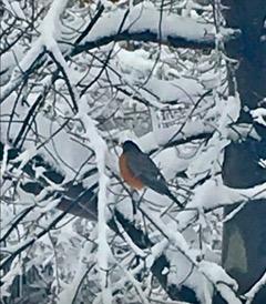 birds#6.jpeg