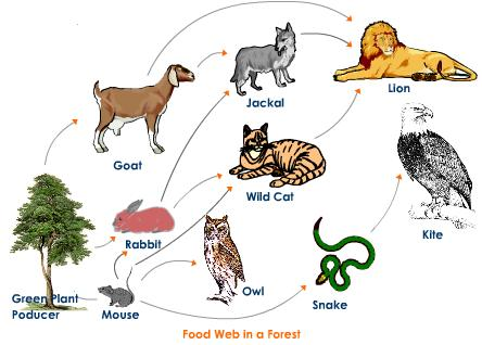 1:30 to 2:20 - In science, you explore your place in this planet and the place of the food you eat by learning about food webs and energy transfer among organisms.