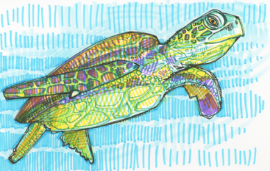 Credit: Gwenn Seemel, 'Sea Turtle drawing (2015)
