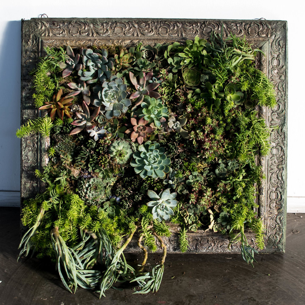 """Forest Grimoire    vertical succulent garden with up-cycled frame  24"""" x 24"""" x 6"""""""