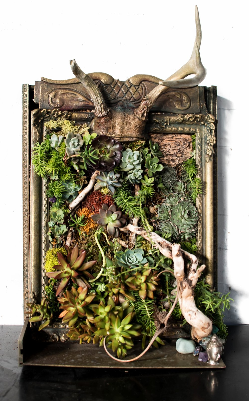 """New Life     vertical succulent garden in up-cycled frame with antlers and altar shelf  24"""" x 15"""" x 10"""""""