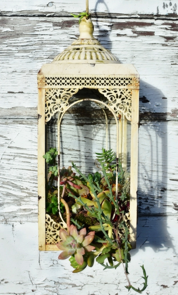 "Desert Sunrise   up-cycled metal lantern frame with hanging succulent garden  25"" x  6"" x 6"""