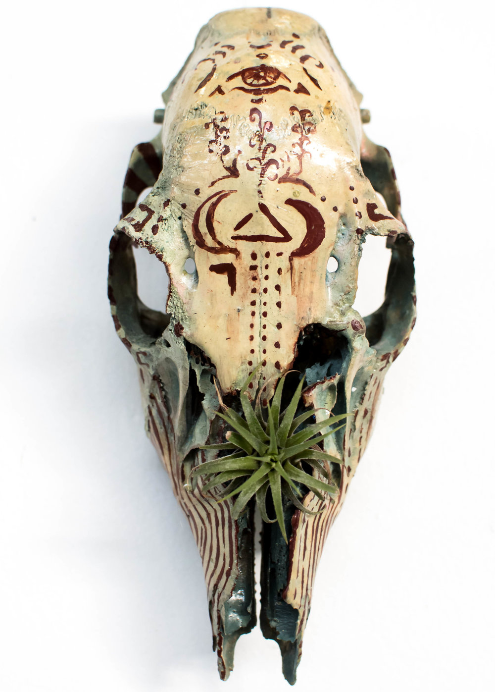 "Spirit Guide    reclaimed skull with painted sigil for keeping an open perspective and inspiring internal growth  10"" x 7"" x 5"""