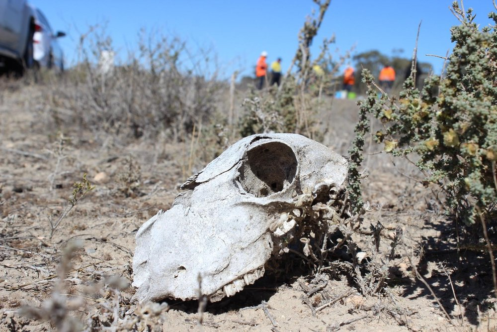 Broken hill 2.jpg