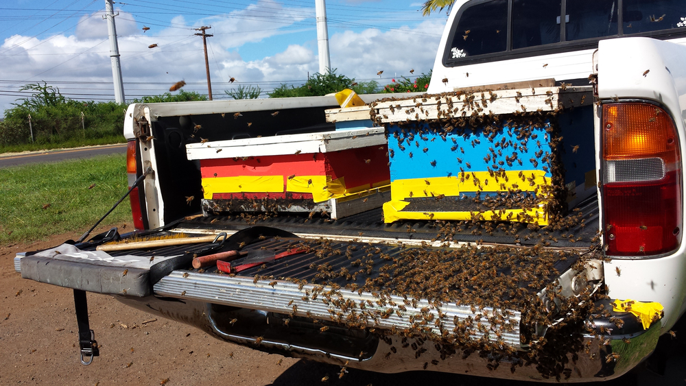 We remove beehives and catch swarms