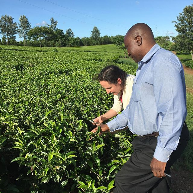 Tea for miles! This day a year ago the @rarecharity team and @raretealady visited the team at Satamwa to talk tea and tertiary education. This is Henrietta and Mr Mandala (Head of HR at Satemwa) admiring the tea leaves. So much has happened and there is so much more to come. Thank you for being part of it 😍 #rarecharity #directtrade #directcharity #tertiaryeducation #tea
