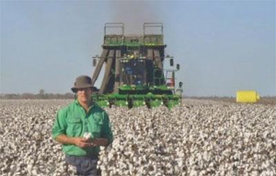 cotton-farming.jpg