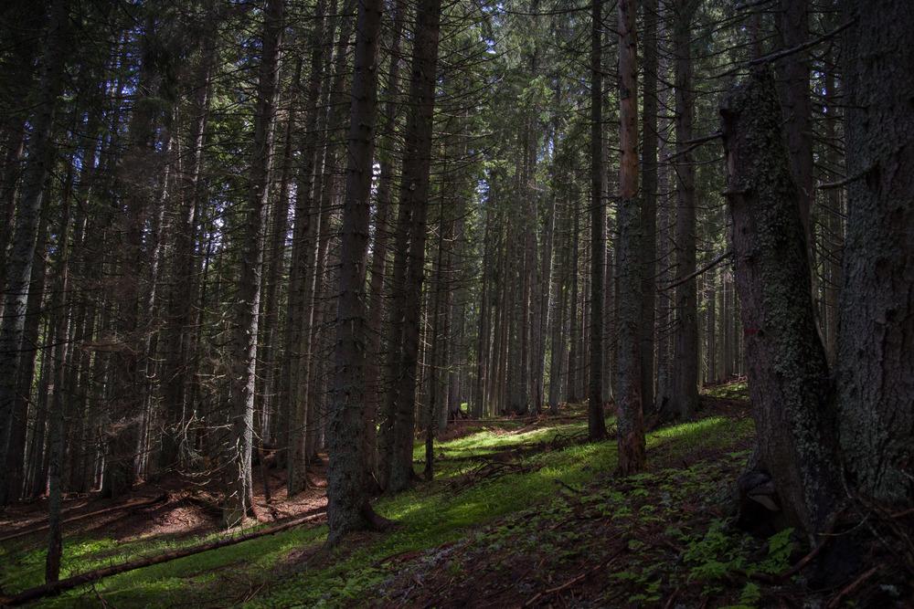 Foresta intorno a Tarvisio, durante l'attraversata carnica