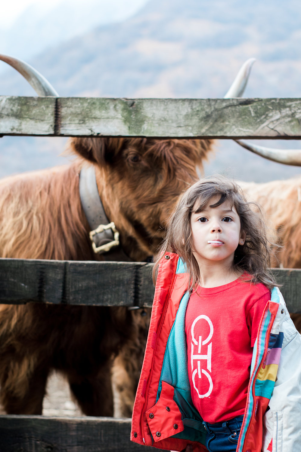 Bonus photo of Sutton and the cows because both are super cute.