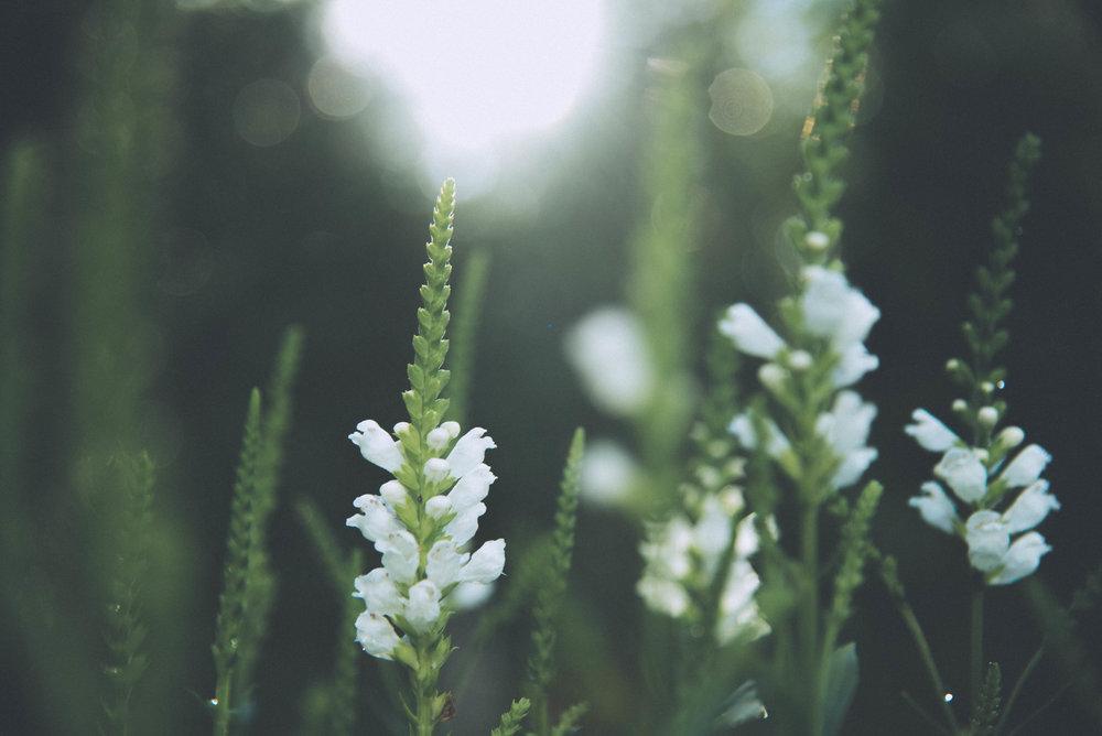 Botanic | LAR - Laurie-Anne Roux Photographe